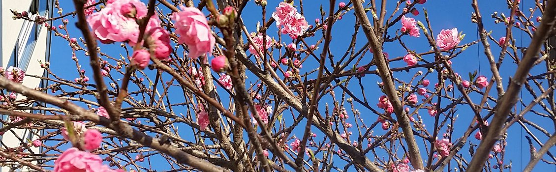 Blossoms by Clifton