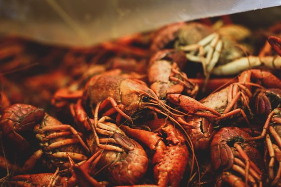 a pile of red crawfish