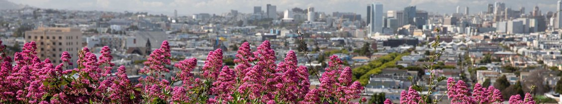 Flowers with the San Fransisco skyline in the background